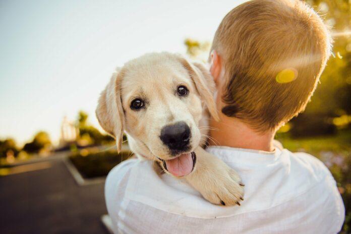 Kind mit Hund auf dem Arm